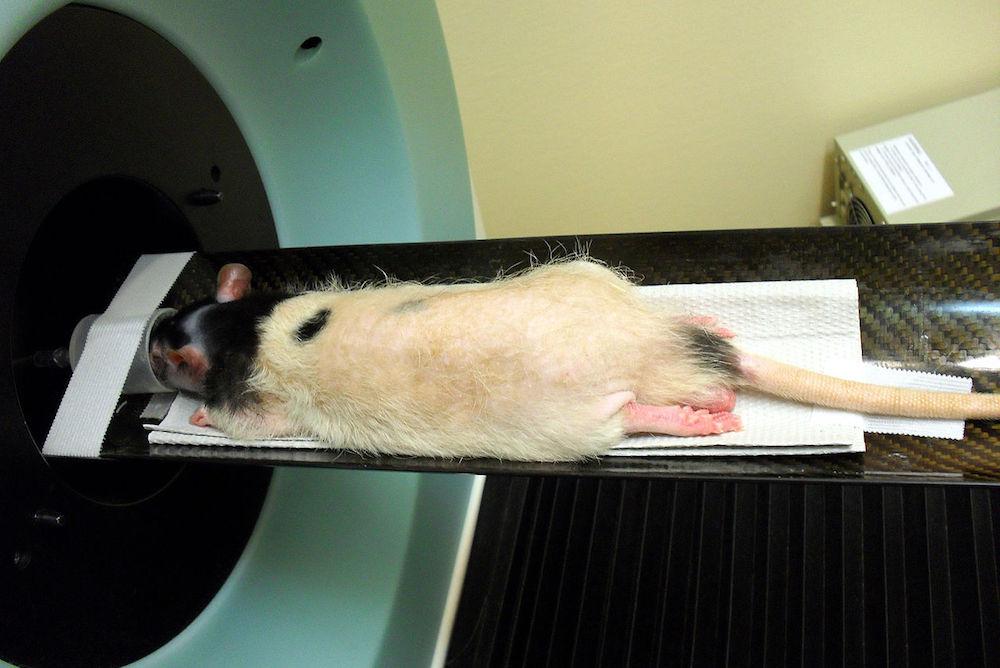rats de laboratoire datantCreepy en ligne rencontres Guy meme