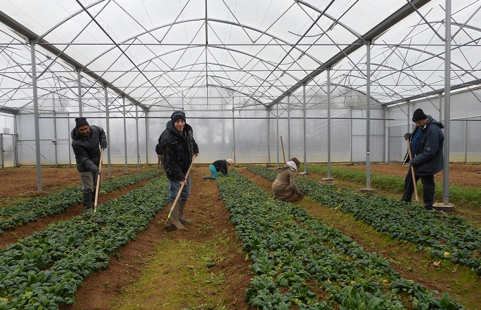 Les jardins de cocagne cultivent les hommes libres for Oasis jardin de cocagne