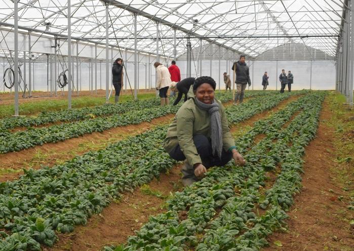 Les Jardins de Cocagne cultivent les hommes libres)