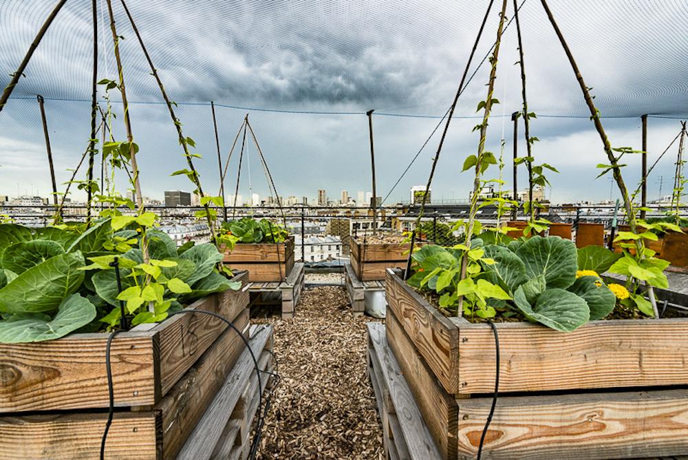 Le toit d'AgroParisTech.