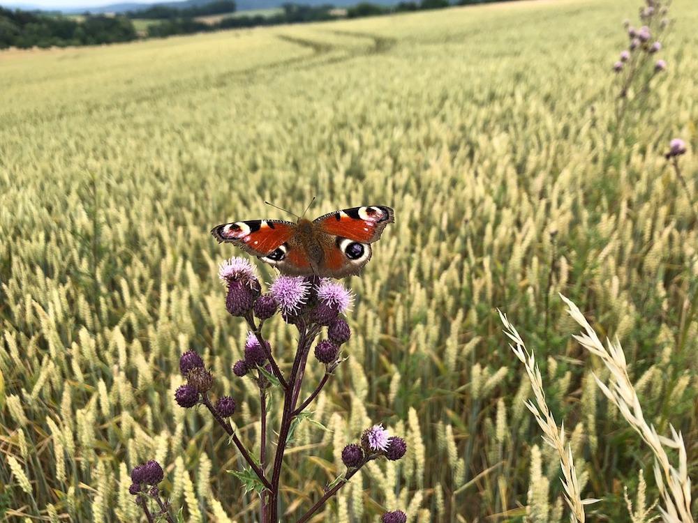 LUTTES POUR LE VIVANT Butterfly-3536626_960_720
