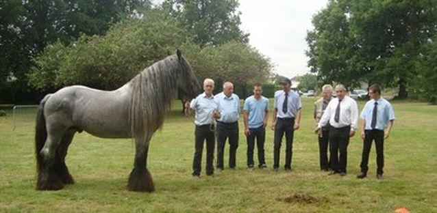 cheval de trait achat