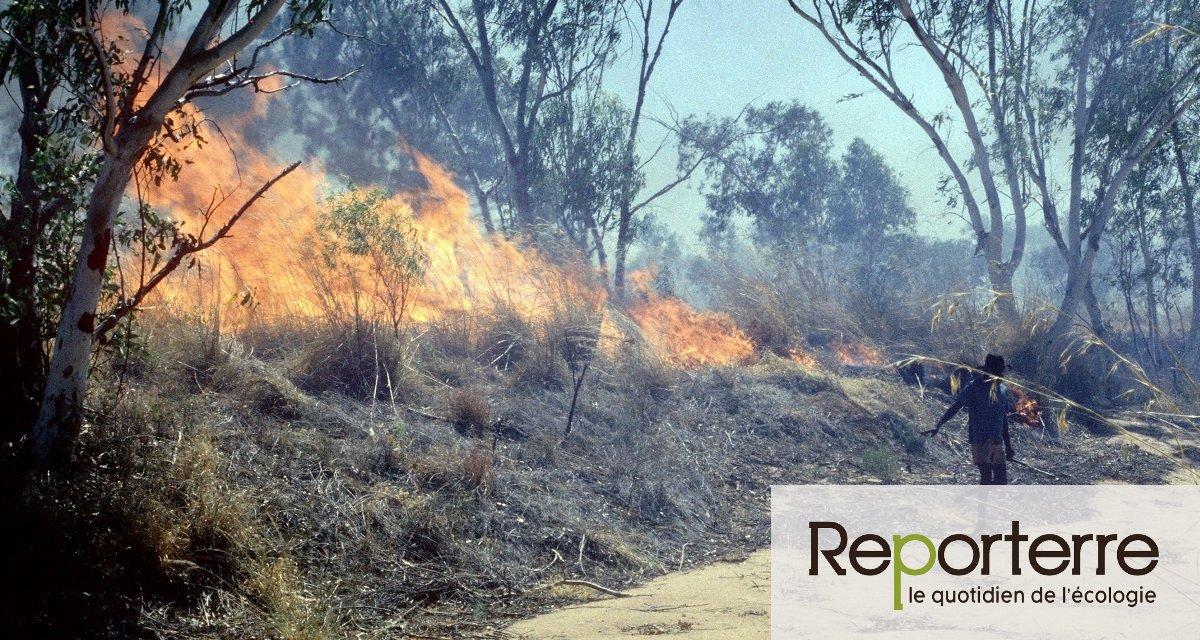 Australie : les savoir-faire aborigènes, une solution contre les mégafeux