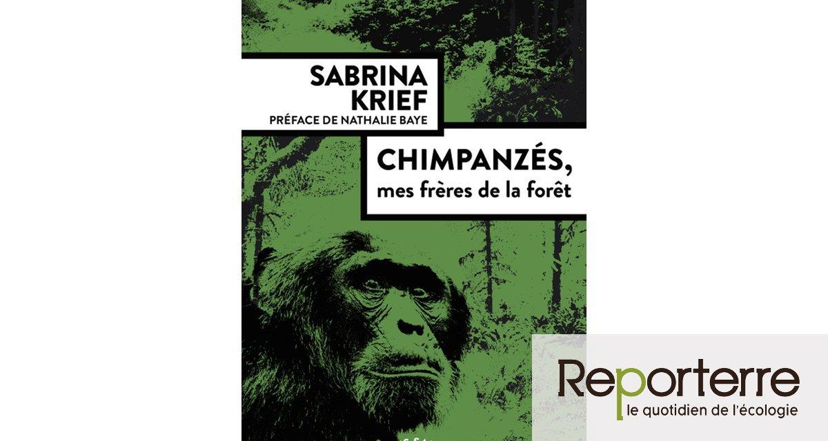 Sur les traces des chimpanzé d'Ouganda