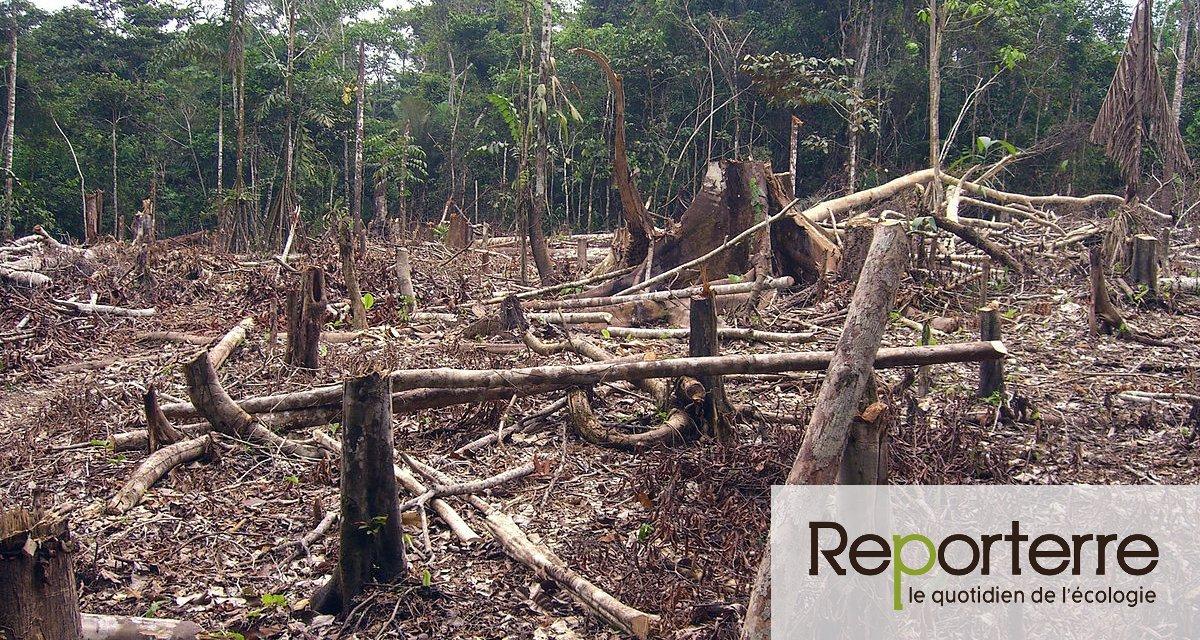 Le Parlement européen veut mettre fin à la déforestion mondiale provoquée par l'UE