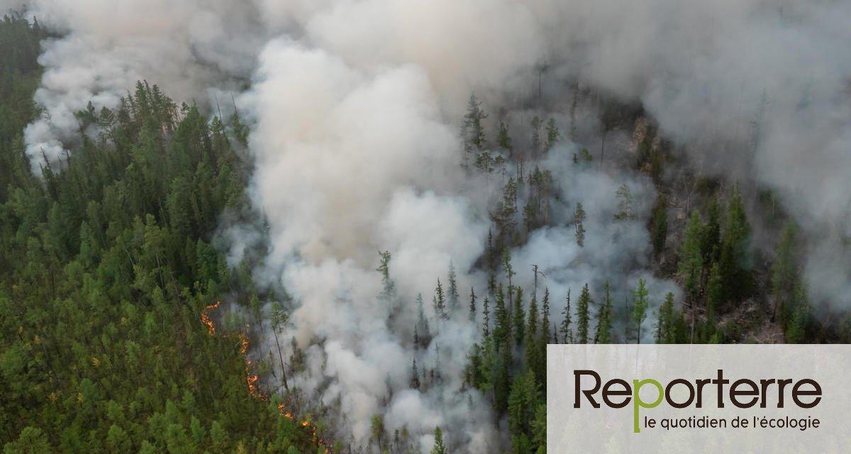 Feux géants en Sibérie : un été dévastateur pour l'environnement