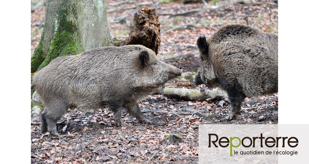 Le gouvernement veut que la chasse commence deux mois plus tôt