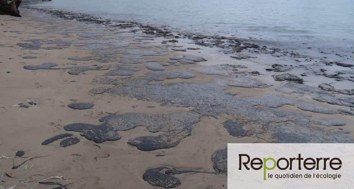 Au Brésil, la marée noire dévaste les côtes et le gouvernement ne fait rien
