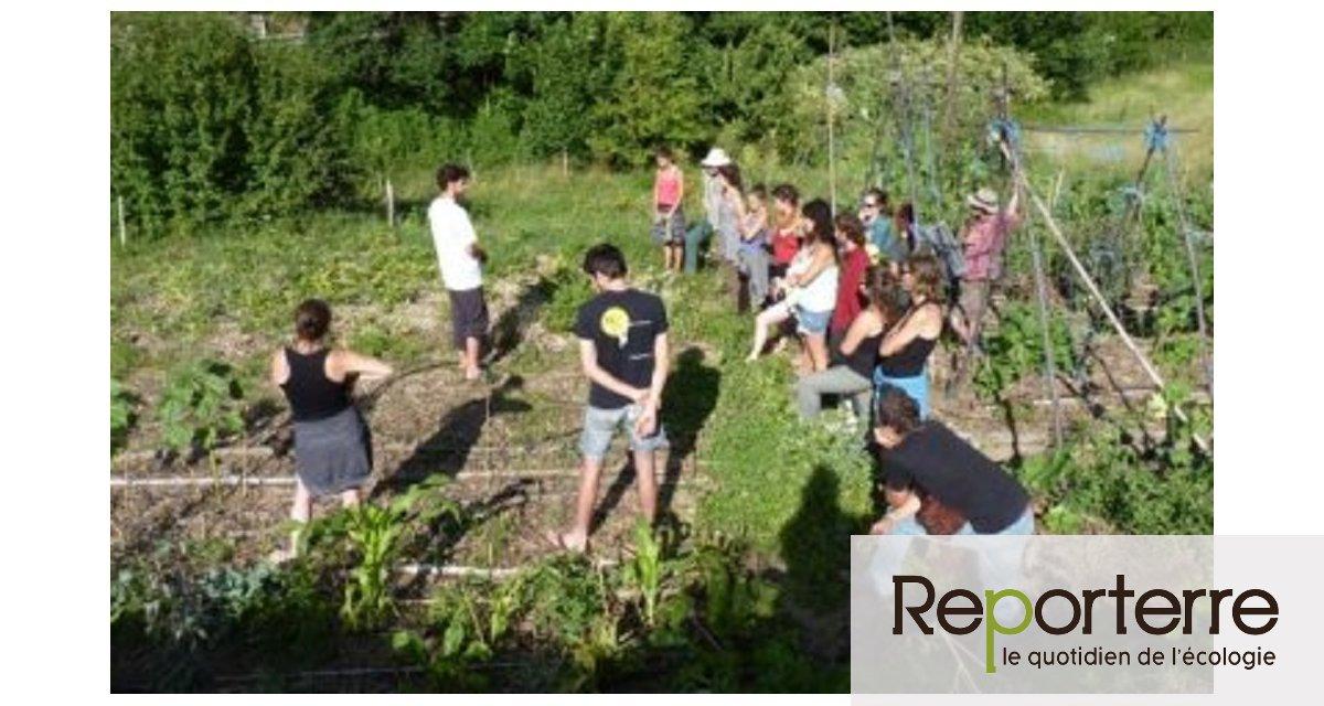 Ça y est! J'ai compris ce qu'est la permaculture!