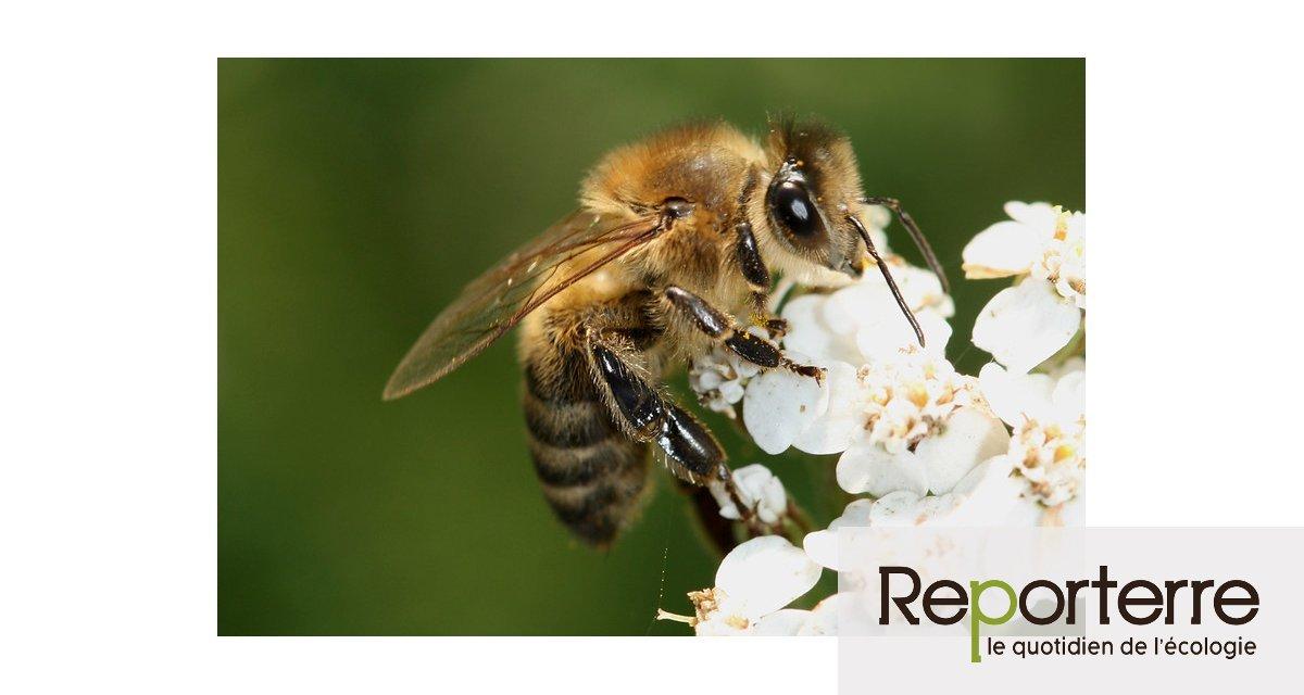 Dow AgroSciences veut annuler l'interdiction d'insecticides toxiques pour les abeilles