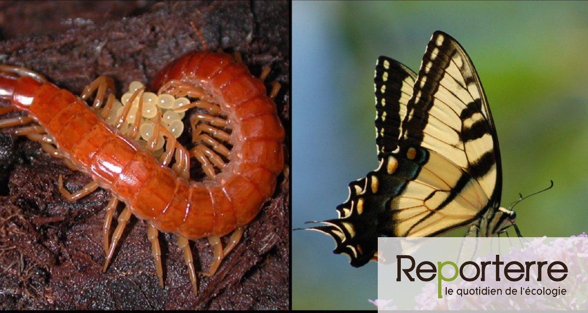 Un déclin vertigineux des insectes observé en Allemagne