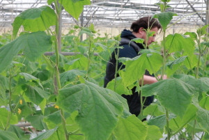 Image / illustration