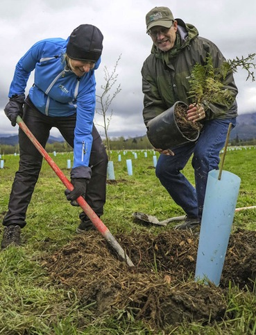 L'Irlande plante un million d'arbres en une journée
