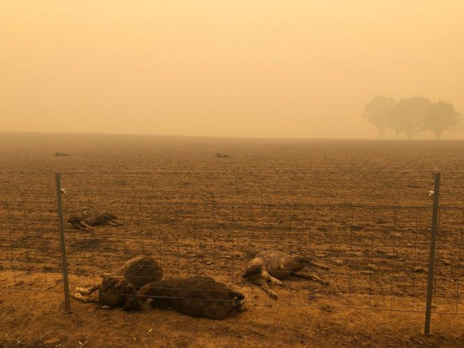 Feux En Australie 24 Morts 100 000 Personnes Evacuees Un Demi Milliard D Animaux Morts
