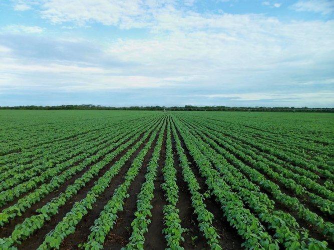 Les importations d'huile de soja stimulent la déforestation, selon une nouvelle étude