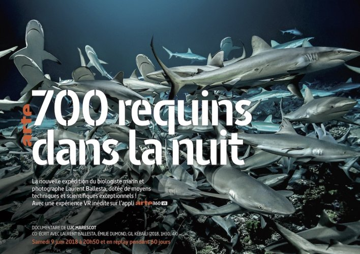 "À <span class=""caps"">LA</span> TÉLÉ - Le secret des requins gris"