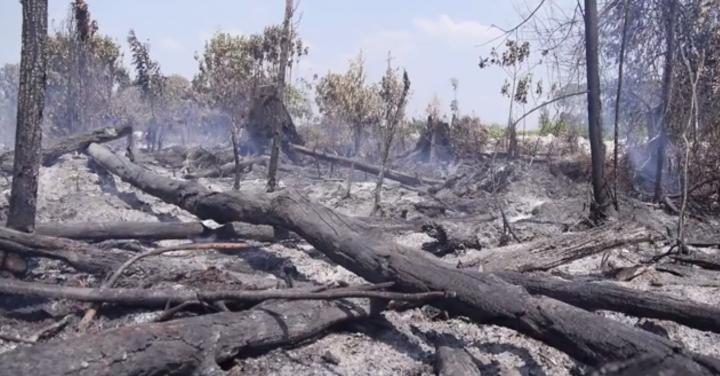 Le gouvernement impose à l'Assemblée de soutenir l'huile de palme importée par Total