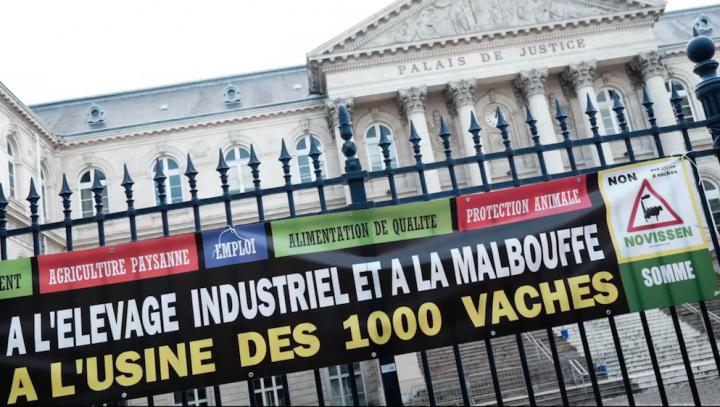 Le tribunal administratif absout les illégalités de la ferme-usine des Mille vaches