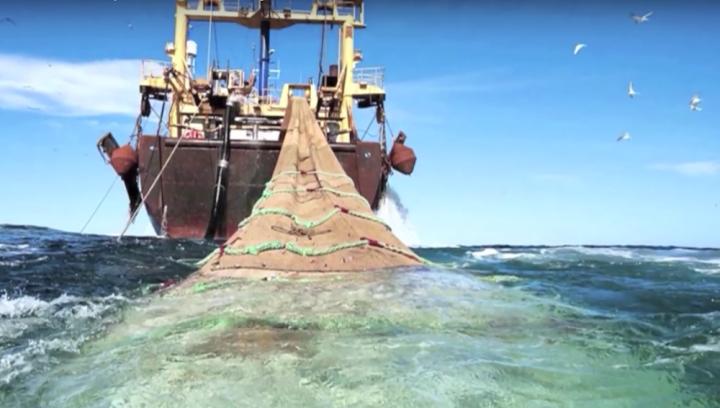 La pêche au chalutage profond, désastreuse pour l'écosystème marin, reste autorisée