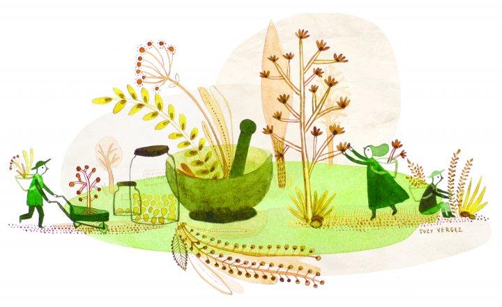 Le grand retour de l'herboristerie