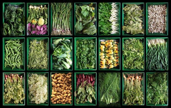 Une étude scientifique conclut aux effets bénéfiques globaux de l'agriculture biologique