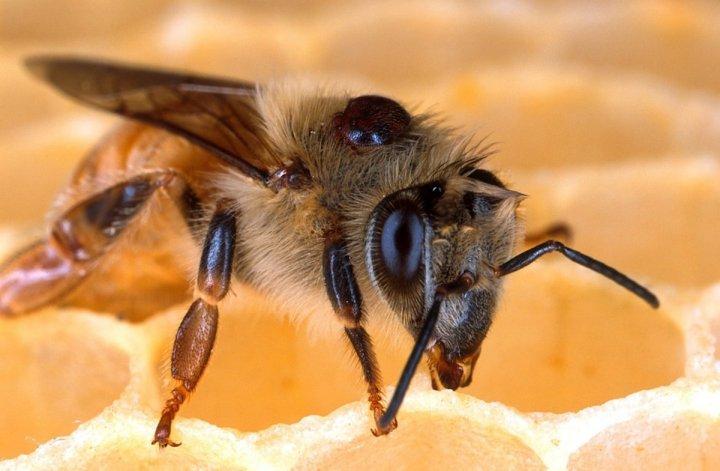 Reporterre sur France Inter: les abeilles privées de médicament<small class=