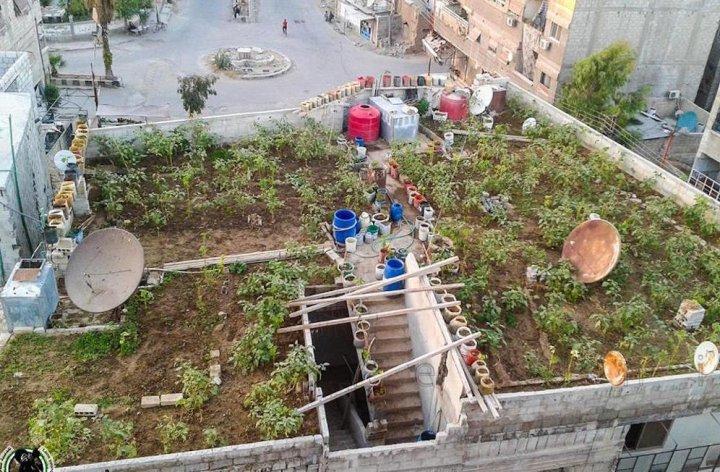 Des semences paysannes pour les paysans syriens: un bel exemple de solidarité contre la guerre