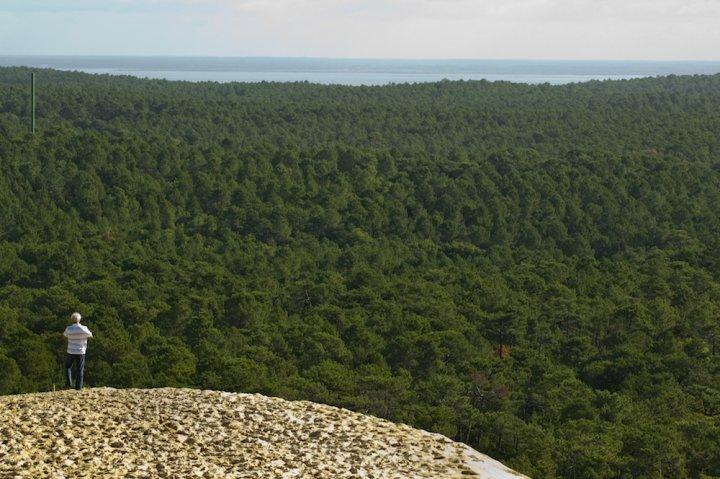 Le gouvernement veut adapter la forêt à l'industrie