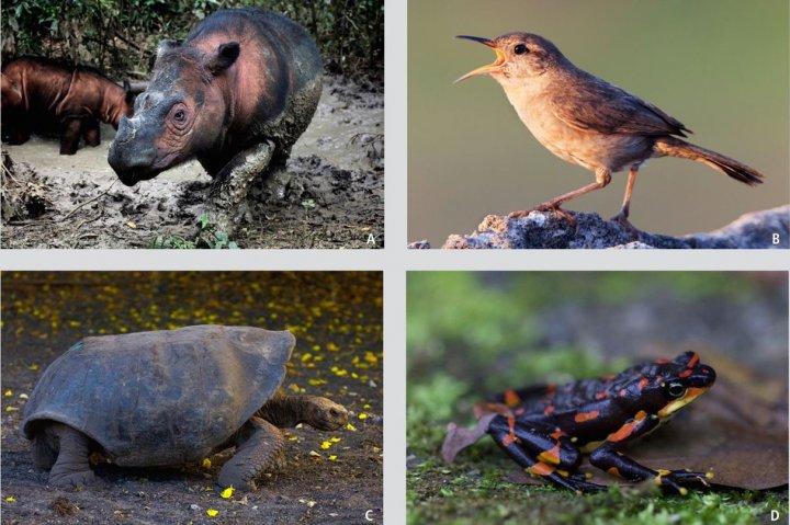 La sixième extinction de masse s'accélère à un rythme vertigineux