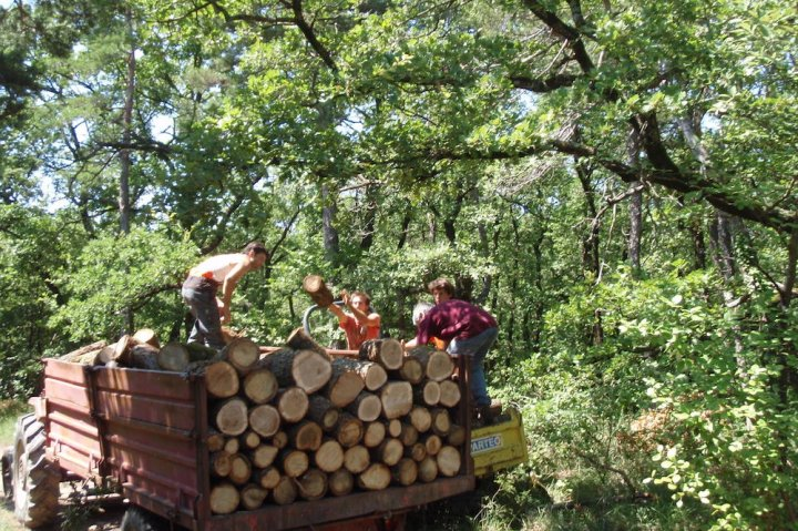 Avec les Amap Bois, une autre forêt est possible