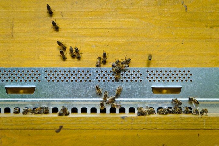 """Chères abeilles, la ruche horizontale est faite pour vous<small class=""""fine""""></small>!"""