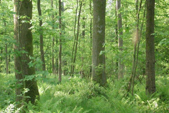 Une méthode écologique d'user de la forêt: la futaie irrégulière