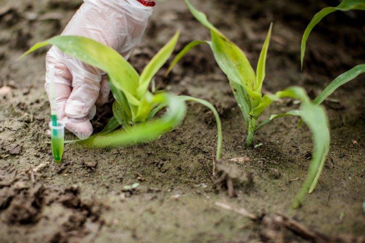 Le traité CETA est une arme pour ouvrir l'Europe aux OGM