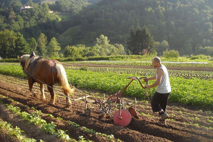 """«<small class=""""fine""""></small>La transition agricole viendra des néo-paysans<small class=""""fine""""></small>»"""