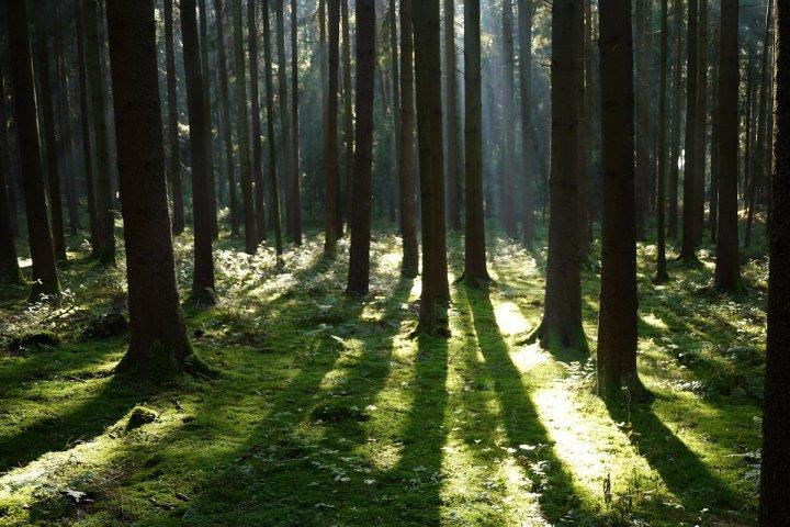"""Forêts publiques: l'État réfléchit au démantèlement de l'<span class=""""caps"""">ONF</span>"""