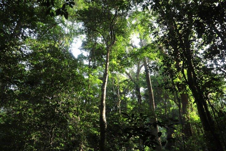 En Côte d'Ivoire, une forêt menacée est devenue une réserve naturelle modèle
