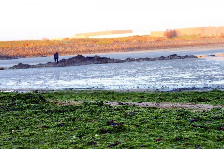 Algues vertes en Bretagne: 4 points pour comprendre le problème