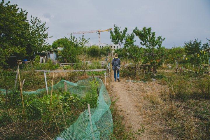 A Dijon, les terres agricoles du quartier des Lentillères sont sauvées