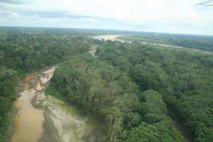 La déforestation en Amazonie est liée à l'exportation vers l'Europe de bœuf et de soja, montre une étude scientifique