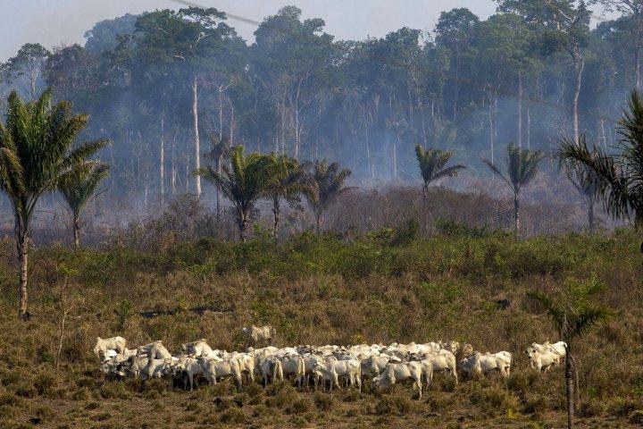 Le traité Mercosur aurait des conséquences désastreuses pour l'Amazonie