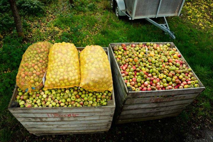 Agroécologie et capitalisme ne sont pas conciliables
