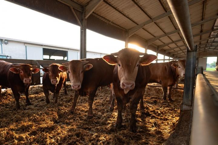 La politique agricole commune n'est pas raccord avec le climat