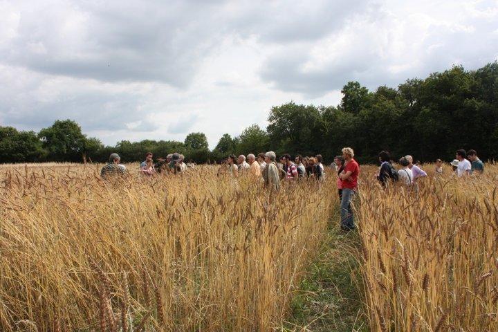 Face aux multinationales qui veulent s'emparer de la semence, les paysans résistent par l'idée de bien commun Arton7672-d5bdc