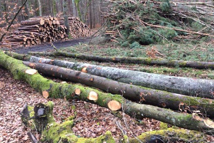 Massacre au bulldozer en forêt de Fontainebleau