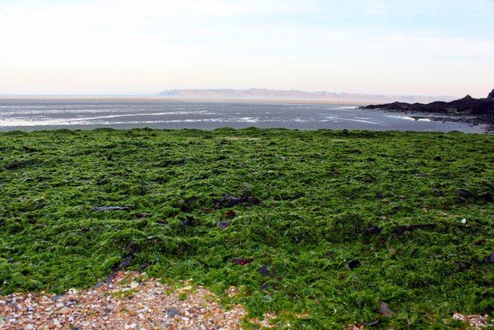 Algues vertes: le désastre s'amplifie