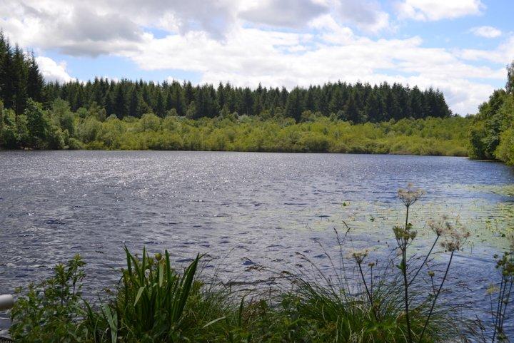 Pour sauver la forêt du Morvan, des gens se groupent pour l'acheter peu à peu