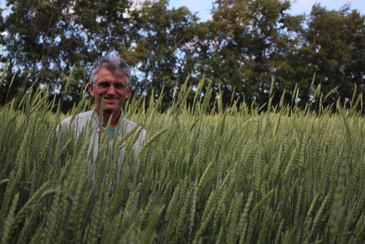 Dans le nord de la France, des paysans redonnent vie aux blés anciens