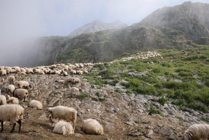 Dans les Pyrénées, ces bergers qui neveulent pas la peau de l'ours