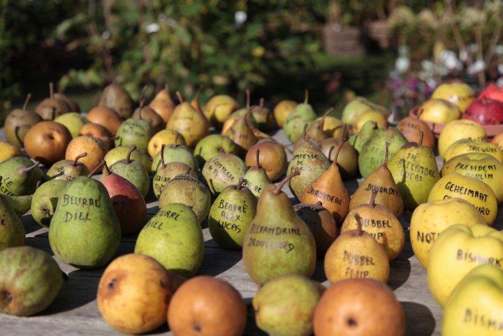 L'effondrement de la biodiversité met en péril l'alimentation mondiale