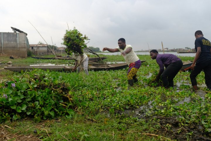Au Bénin, l'invasive jacinthe d'eau est aussi devenue un «<small class=